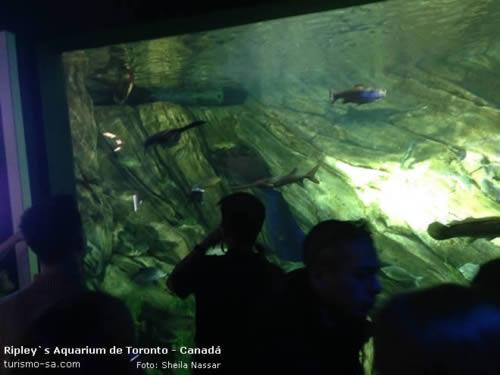 Ripley's Aquarium Toronto, Canadá
