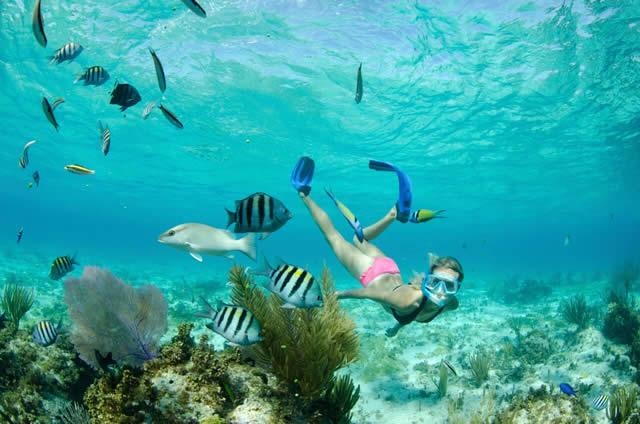 Snorkel - Ilhas Cayman - Cayman Island - Caribe - Caribbean - Islas - Isla